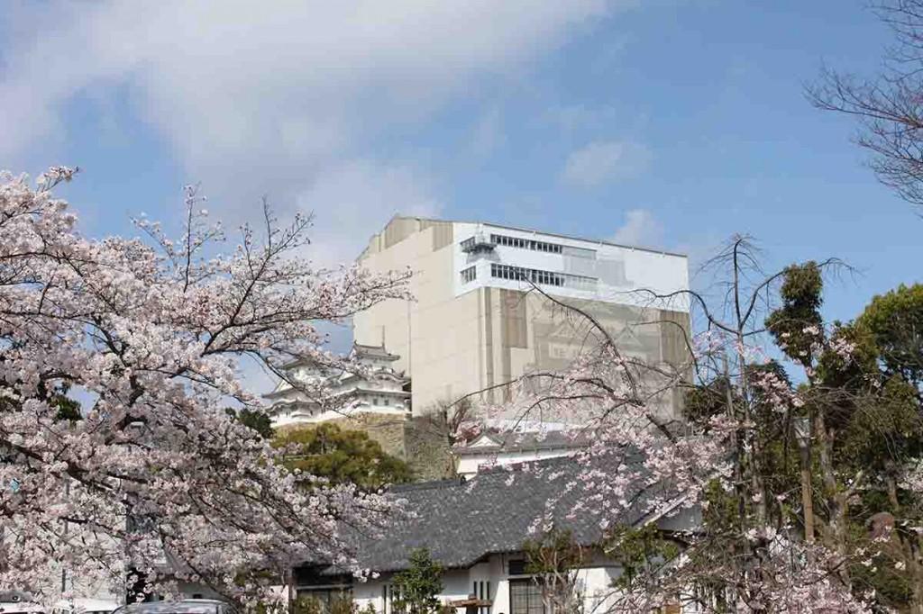 04_姫路城と桜