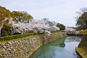 05_桜と内堀