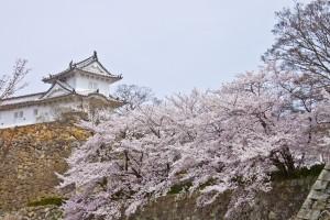 06_桜と櫓