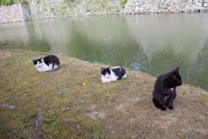 07_堀には猫たちがのどかに住んでいます