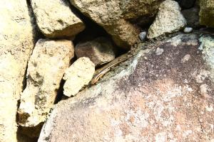 07_07.姫路城のヤモリ