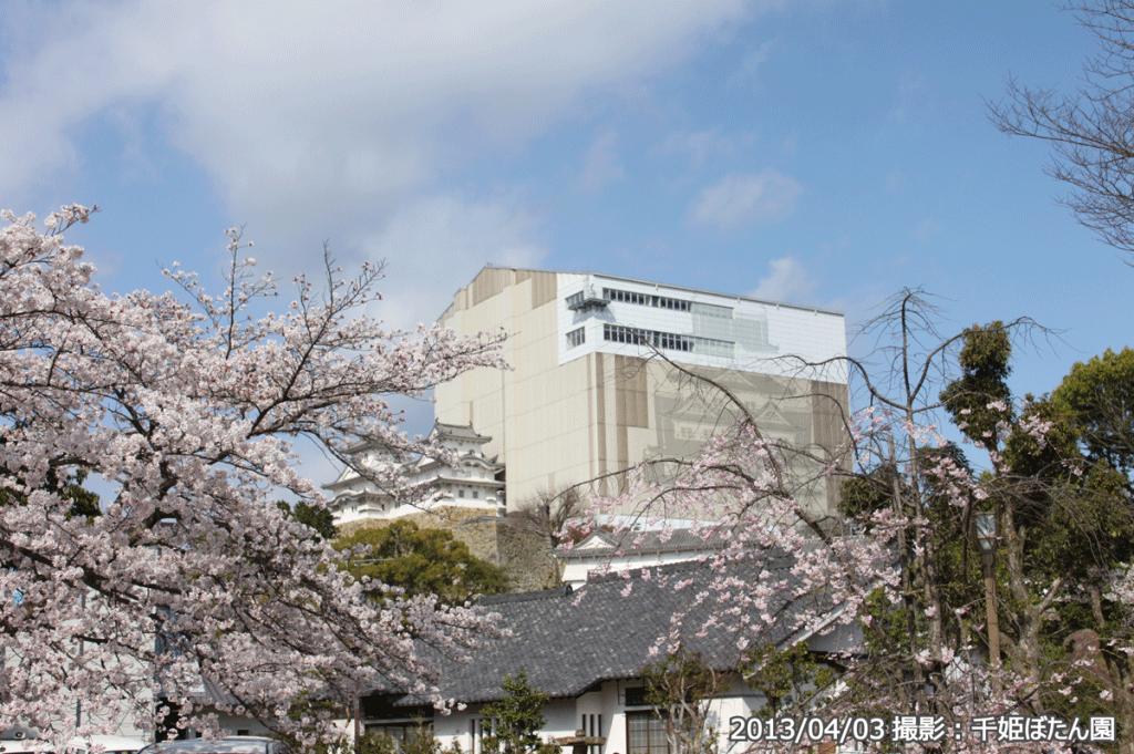 12_姫路城改修工事・千姫ぼたん園(2013/04/03)