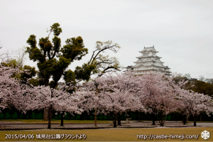 cherry-blossoms-end2015_01