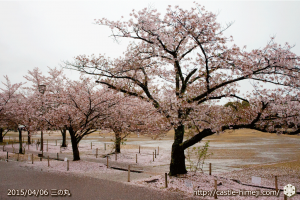 cherry-blossoms-end2015_02