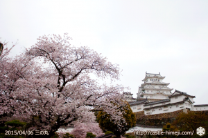 cherry-blossoms-end2015_03