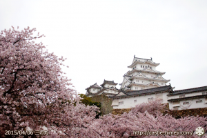 cherry-blossoms-end2015_04
