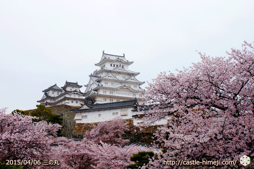 cherry-blossoms-end2015_05