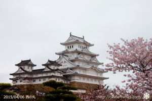 cherry-blossoms-end2015_10