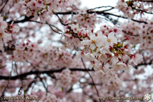 cherry-blossoms-end2015_11