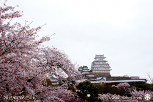 cherry-blossoms-end2015_14