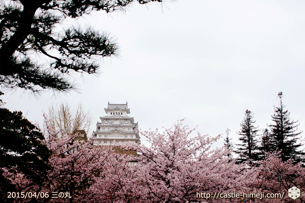 cherry-blossoms-end2015_15