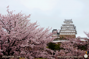 cherry-blossoms-end2015_16