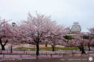 cherry-blossoms-end2015_17