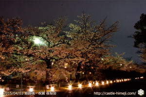 cherry-blossoms-night2015_02