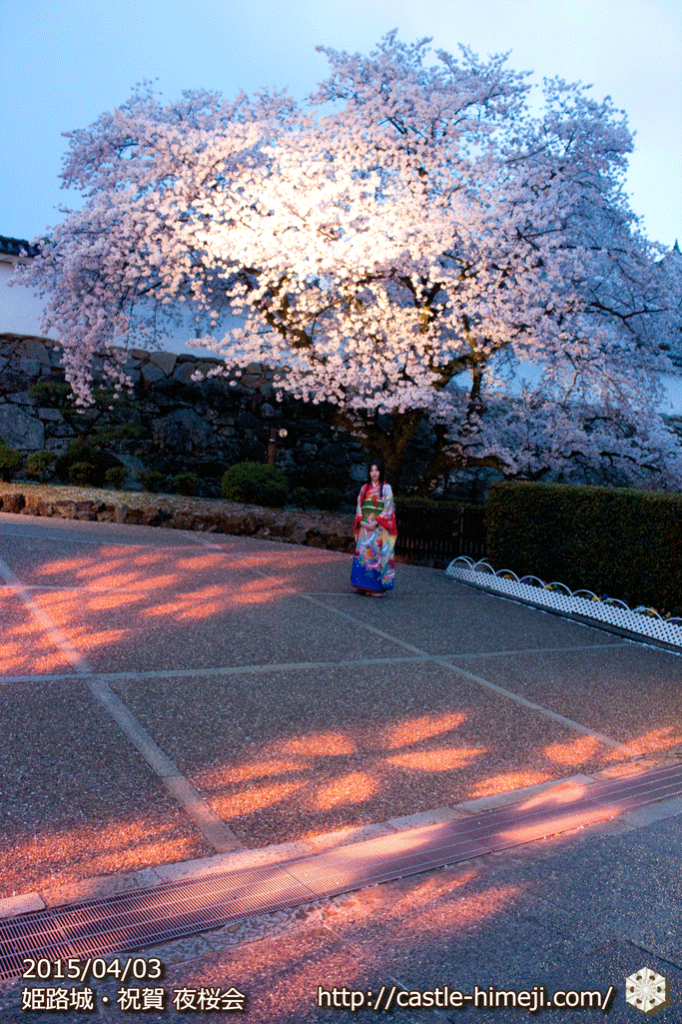 cherry-blossoms-night2015_05
