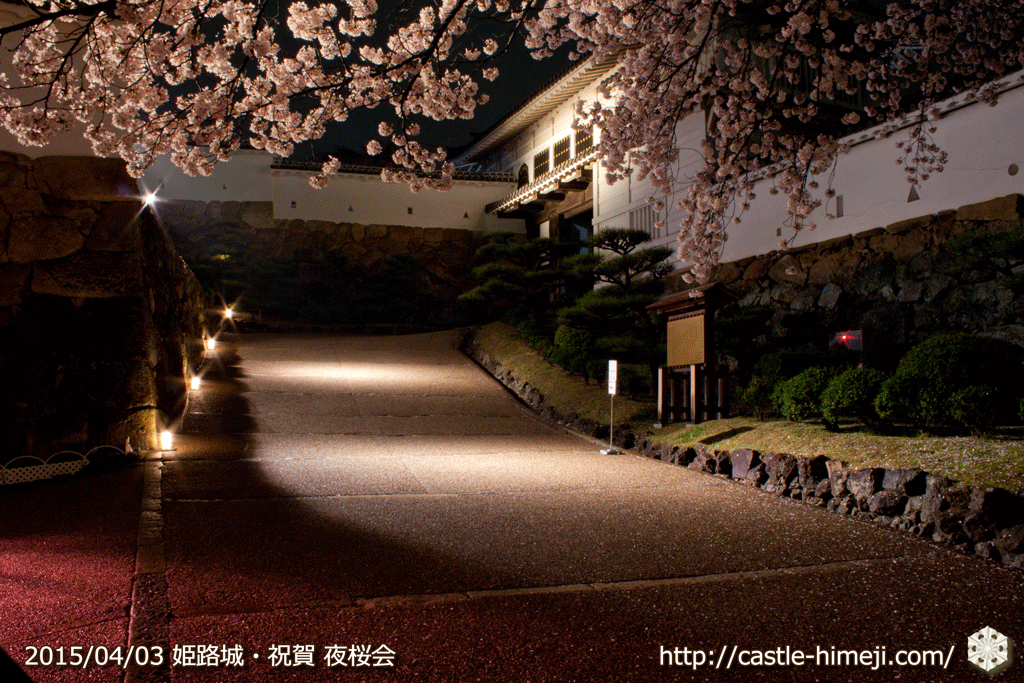 cherry-blossoms-night2015_09