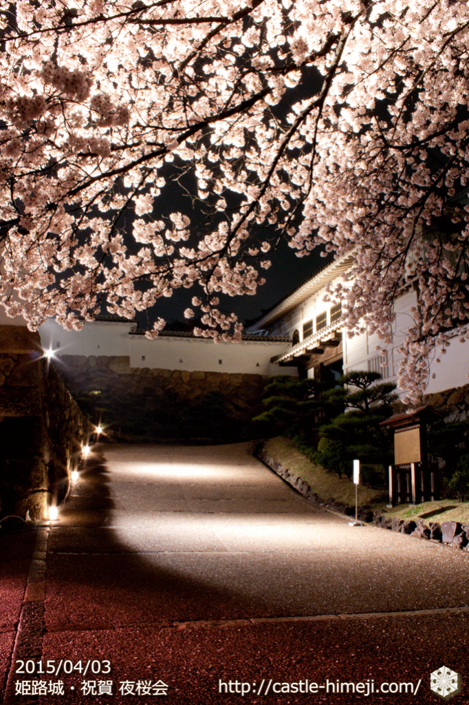 cherry-blossoms-night2015_10