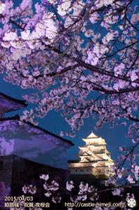 cherry-blossoms-night2015_14