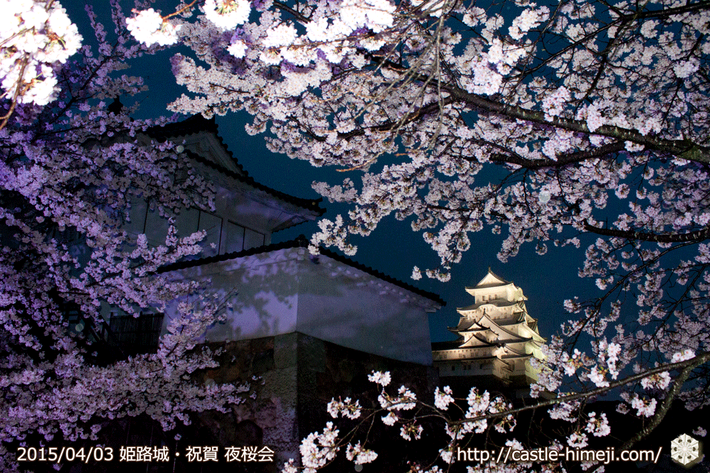 cherry-blossoms-night2015_16