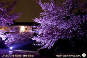 cherry-blossoms-night2015_19