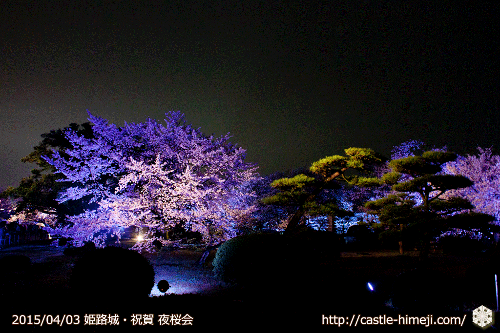 cherry-blossoms-night2015_20