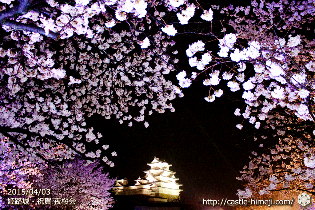 cherry-blossoms-night2015_21