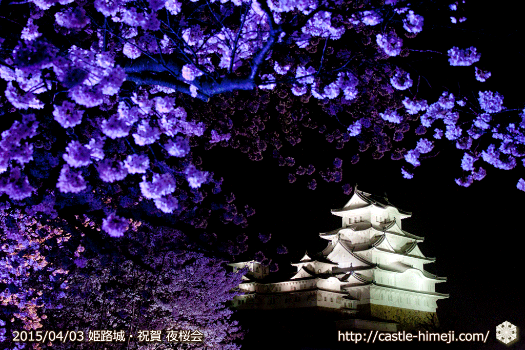 cherry-blossoms-night2015_22