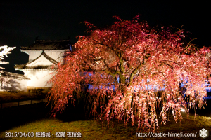 cherry-blossoms-night2015_23