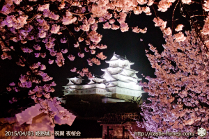 cherry-blossoms-night2015_25