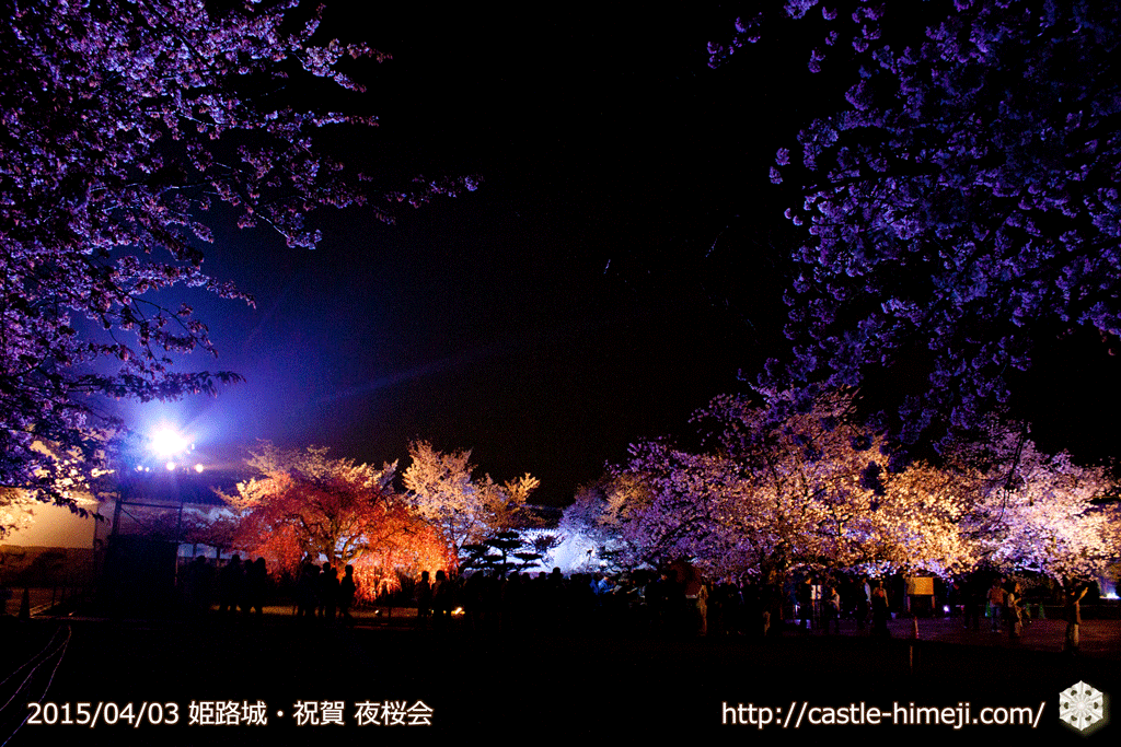 cherry-blossoms-night2015_26