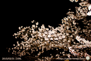 cherry-blossoms-ready_03