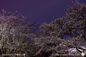 cherry-blossoms-ready_05