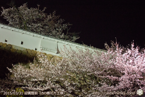 cherry-blossoms-ready_09