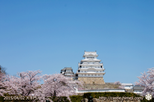 cherry_blossoming2015_01