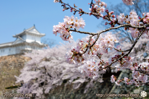 cherry_blossoming2015_20