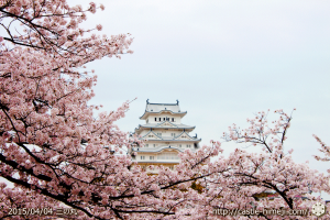 cherry_blossoming2015_p2_01