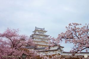 cherry_blossoming2015_p2_02