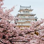 eye_cherry_blossoming2015_p2