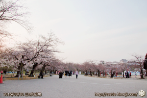 cherry-blossoms20160330_06
