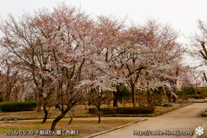 cherry-blossoms20160330_13