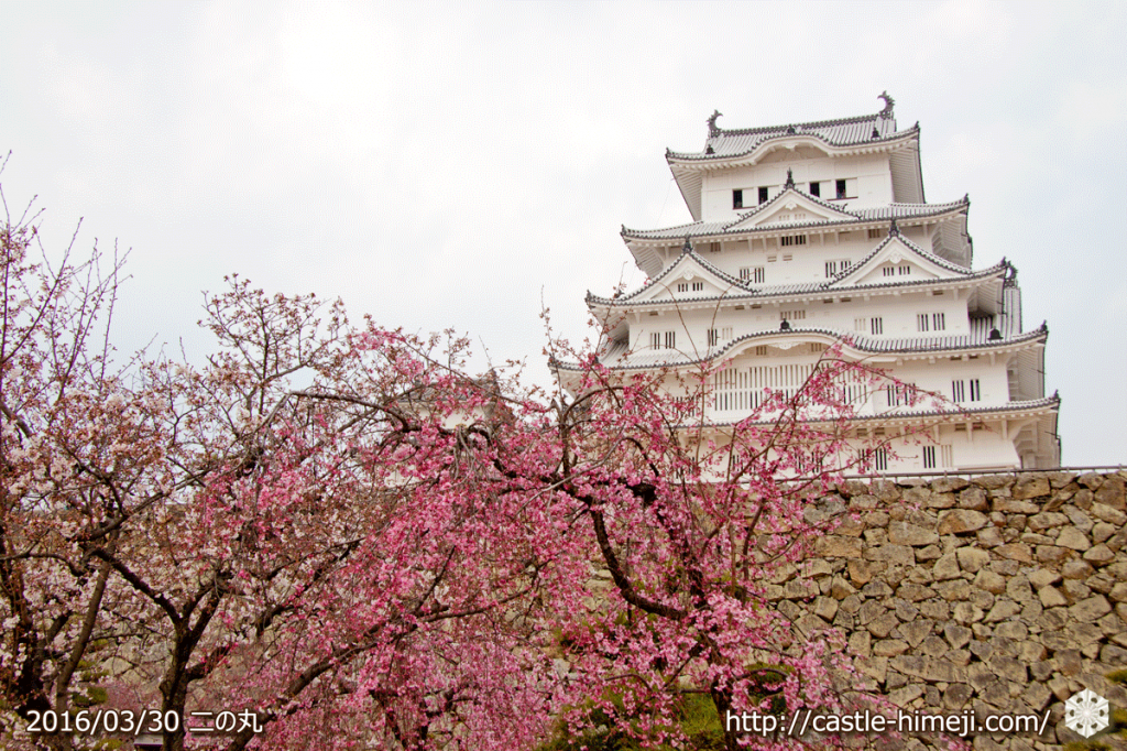 cherry-blossoms20160330_2_08