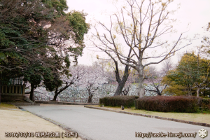 cherry-blossoms20160330_2_09