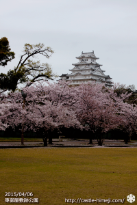 vs-shiromidai_ground_sakura_02