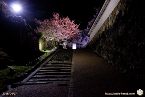cherry-bloom-night2016-last-day_01