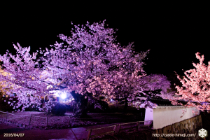 cherry-bloom-night2016-last-day_02