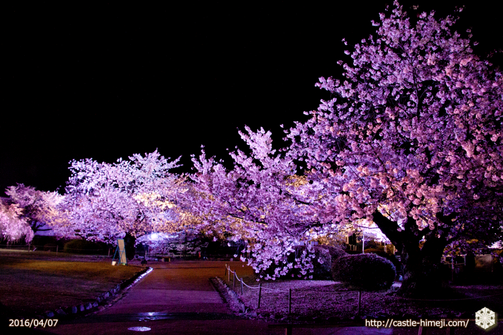 cherry-bloom-night2016-last-day_03