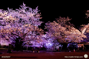 cherry-bloom-night2016-last-day_04