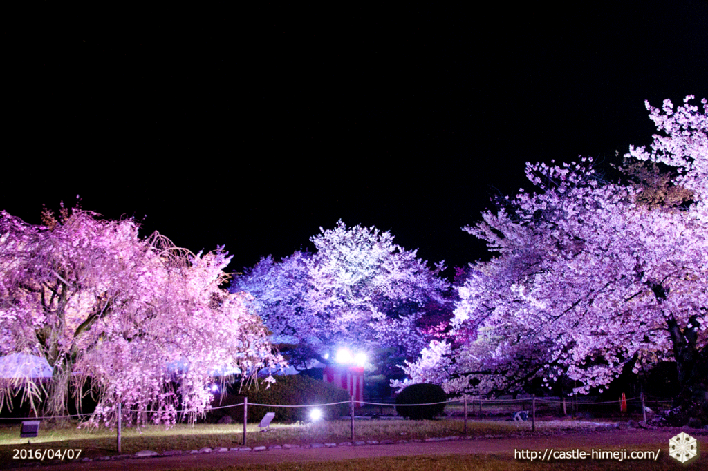 cherry-bloom-night2016-last-day_05
