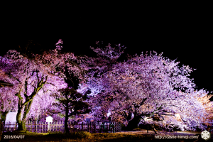 cherry-bloom-night2016-last-day_08