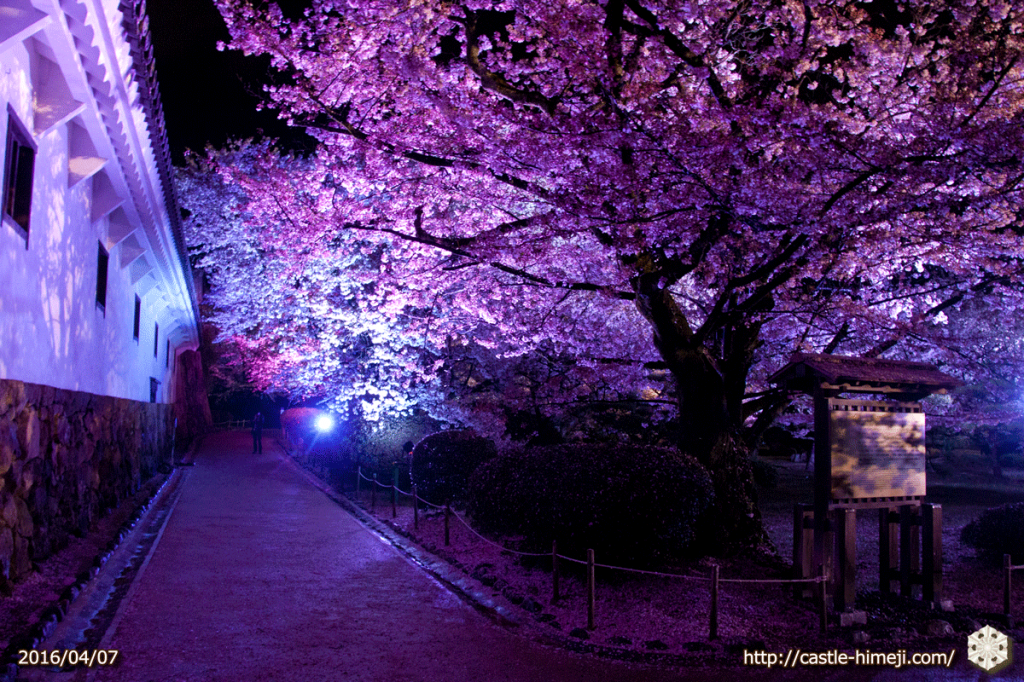 cherry-bloom-night2016-last-day_13
